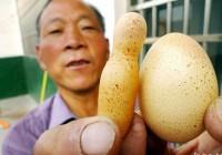 """山东母鸡产下酷似""""火箭""""的独特鸡蛋"""