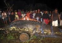 菲律宾捕捉环球最大的咸水鳄鱼 寿命过100
